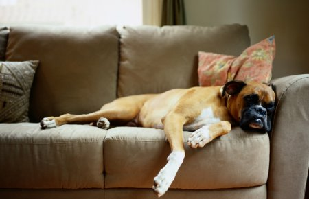 Image - Relaxing Boxer